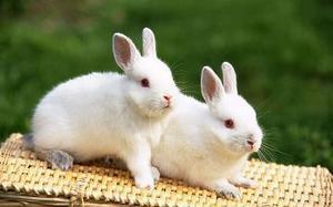 ダブルウサギ.jpg